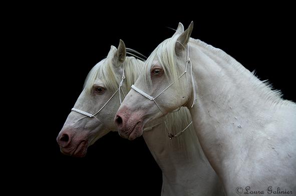 Book Photographe Azalé Photo Equestria 2017