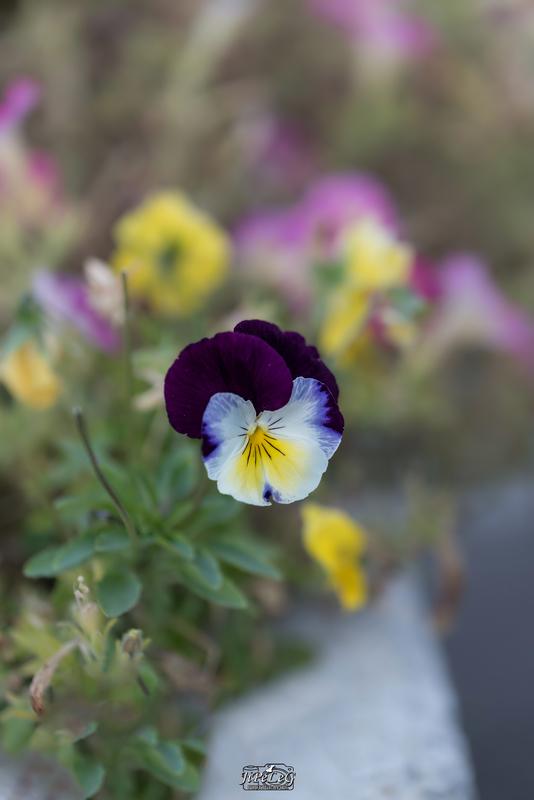 Book Photographe Photographie-By-JiPeLeg Fleurs